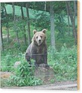 Six Flags Great Adventure - Animal Park - 121263 Wood Print