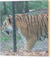 Six Flags Great Adventure - Animal Park - 121278 Wood Print