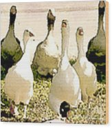 Six Geese And A Duck Wood Print