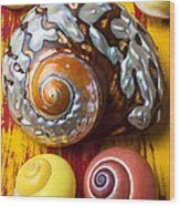 Six Snails Shells Wood Print
