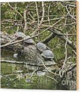 Six Turtle On A Log Wood Print