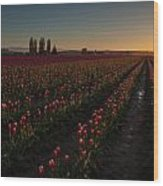 Skagit Dusk Tulip Fields Wood Print