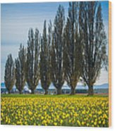 Skagit Trees Wood Print