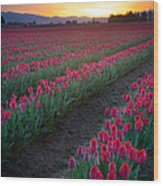 Skagit Valley Blazing Sunrise Wood Print