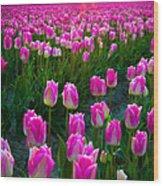 Skagit Valley Dawn Wood Print