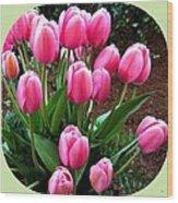 Skagit Valley Tulips 9 Wood Print