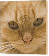 Skc 1483 Unconcerned Stare Wood Print