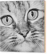 Skc 1498 Wide Eyed Wood Print