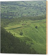 Skc 3566 The Gamut Of Green Wood Print