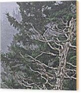 Skeletal Treescape Wood Print