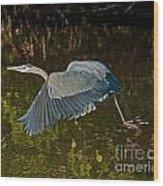 Skimming Great Heron Wood Print
