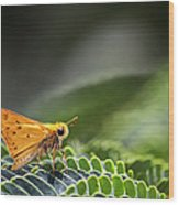 Skipper Butterfly On Mimosa Leaf Wood Print