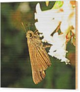 Skipper Butterfly Two Wood Print