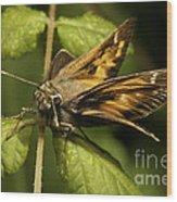Skipper Moth Wood Print