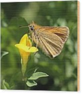 European Skipper On Bird's-foot Trefoil Wood Print