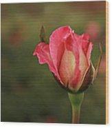 Skc 0422 Blossoming Bud Wood Print
