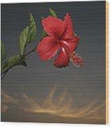 Skc 0452 Hibiscus 3 Wood Print