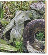 Skull At Cluny Gardens Wood Print