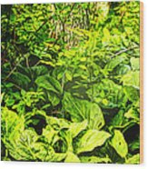Skunk Cabbage Thicket Wood Print
