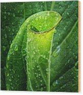 Skunk Cabbage Square Wood Print