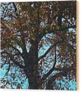 Sky Fall Wood Print