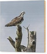 Sky Hunter 2 Wood Print