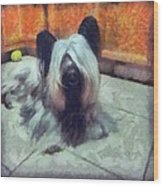 Skye Terrier Wood Print