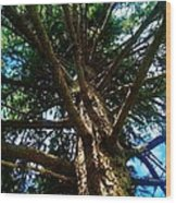 Skyward Spruce Wood Print