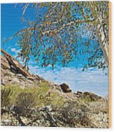 Slanted Rocks And Sycamore Tree  In Andreas Canyon In Indian Canyons-ca Wood Print