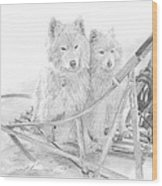 Sled Dogs Riding In Sled Pencil Portrait Wood Print