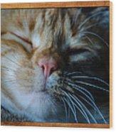 Sleeping Abby Framed Wood Print