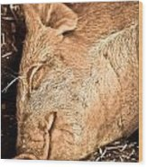 Sleeping And Smiling Pig Wood Print