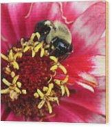 Sleeping Bumble Bee Wood Print