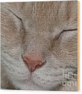 Sleeping Cat Face Closeup Wood Print