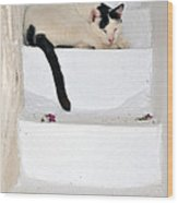 Sleeping Cat In Serifos Town Wood Print