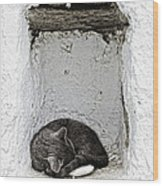 Sleeping Cat Wood Print