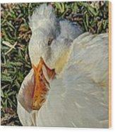 Sleeping Duck Wood Print