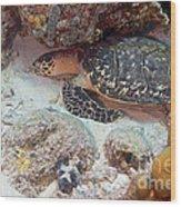 Sleeping Hawksbill Sea Turtle Wood Print