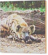 Sleeping Hyena Wood Print