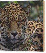 Sleeping Jaguar Wood Print