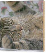 Sleeping Kitty Wood Print