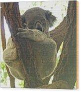 Sleeping Koala In Tree Wood Print