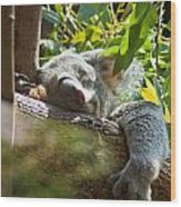Sleeping Koala Wood Print