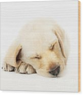 Sleeping Labrador Puppy Wood Print by Johan Swanepoel