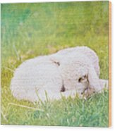 Sleeping Lamb Green Hue Wood Print