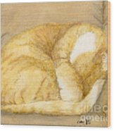 Sleeping Orange Tabby Cat Cathy Peek Animals Wood Print