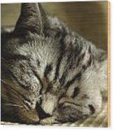 Sleeping Pet Wood Print