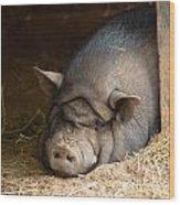 Sleeping Pig Wood Print