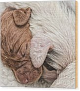 Sleeping Puppies Wood Print