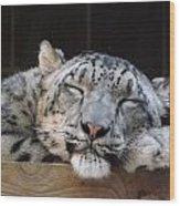 Sleeping Snow Leopard Wood Print